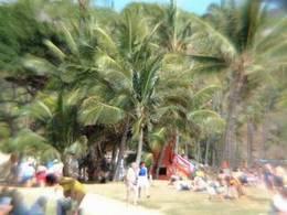 ハワイの浜辺